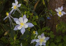 Cedar Breaks Flora imagens de stock royalty free