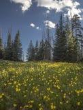 Cedar Breaks Flora fotografia de stock