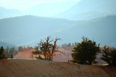 Cedar Breaks National Monument Royalty Free Stock Image