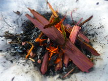 Cedar Camp Fire. Camp fire with cedar scraps on a winter morning Royalty Free Stock Photography