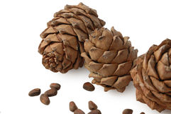 Cedar cone. S and nuts isolated Royalty Free Stock Photography