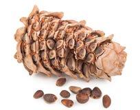Cedar Cone stock fotografie