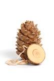 Cedar Cone Fotografia Stock Libera da Diritti