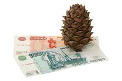 Cedar cone and money Stock Photography