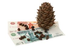 Cedar cone and money Stock Photos
