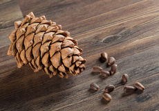 Cedar cone and nuts Royalty Free Stock Image