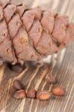 Cedar cone and nuts Stock Photo