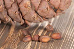 Cedar cone and nuts Royalty Free Stock Photo