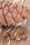 Cedar cone and nuts Stock Images