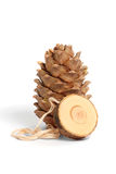 Cedar cone royalty free stock photography