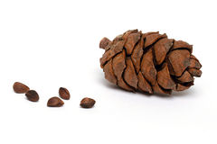 Cedar cone with pine nuts Stock Photo
