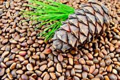 Cedar cone on the texture of cedar nuts Stock Photography
