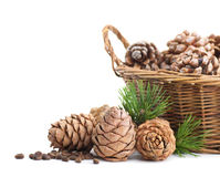 Cedar cones and basket Stock Images