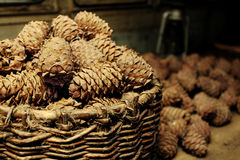 Cedar cones in a basket Stock Image