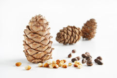 Cedar cones and nuts Royalty Free Stock Photography