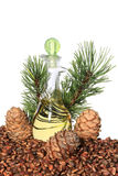 Cedar cones, nuts and cedar nut oil isolated on white background Royalty Free Stock Photography