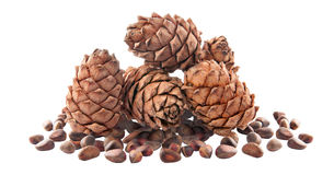 Cedar cones with nuts. Isolated. Royalty Free Stock Image