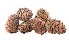 Cedar cones with nuts. Isolated. Royalty Free Stock Images