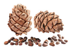 Cedar cones with nuts. Isolated. Stock Photo
