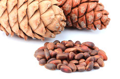 Cedar cones with nuts . Cedar cones with nuts on white background stock images