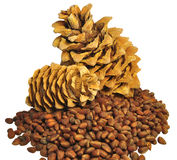 Cedar cones and nuts Stock Photography