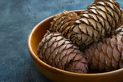 Cedar cones with pine nuts in a bowl Stock Image