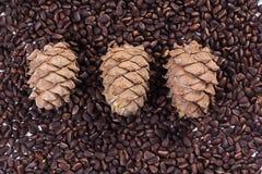 Cedar cones and pine nuts Stock Photos