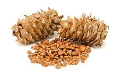 Cedar cones and seeds Royalty Free Stock Photos