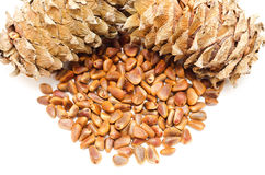 Cedar cones and seeds Royalty Free Stock Image