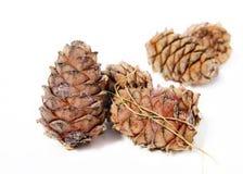 Cedar cones on white background. Still life with cedar cones on white background Stock Photography