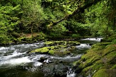 Cedar Creek Royalty Free Stock Photography
