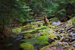 Cedar Creek Images stock