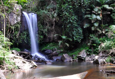 Cedar Creek Falls. In the rainforests at Mount Tamborine in the Gold Coast Hinterland, Queensland, Australia Royalty Free Stock Photo