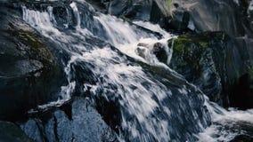 Cedar Creek Falls en el soporte Tamborine metrajes