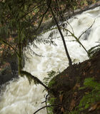Cedar Creek near the Old Grist  Mill: Woodland, Washington Royalty Free Stock Image