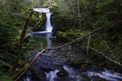 Cedar Creek Waterfalls Imagens de Stock