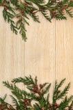 Cedar Cypress Border stock fotografie