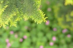 Cedar, cypress, cypress, cedar Royalty Free Stock Image
