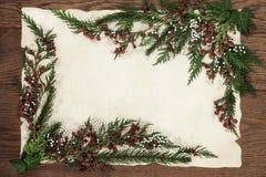 Cedar Cypress and Fir Border Stock Photo