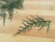 Cedar Cypress Leaf royalty-vrije stock foto's