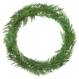 Cedar Cypress Wreath Arkivfoto