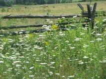 Cedar fence Stock Photos