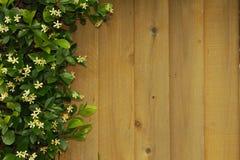 Cedar Fence & Jasmine Left Stock Afbeelding