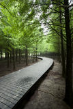 Cedar forest with curving wood road Stock Photography