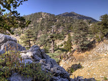 Cedar forest at foothill of Mount Tahtali, Turkey Royalty Free Stock Image