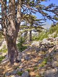 Cedar forest at foothill of Mount Tahtali, Turkey Stock Photos