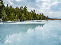 Cedar Forest Beside Frozen Marsh. Winter Thaw Cedar Forest Beside Frozen Marsh water covering the ice from an early winter thaw Royalty Free Stock Image
