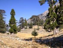 Cedar forest on Mount Tahtali, Turkey Royalty Free Stock Photo