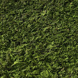 Cedar hedge Stock Photos