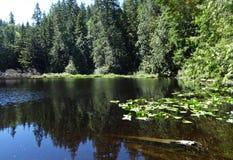Cedar Lake in de vroege zomer op Chuckanut-berg Stock Foto